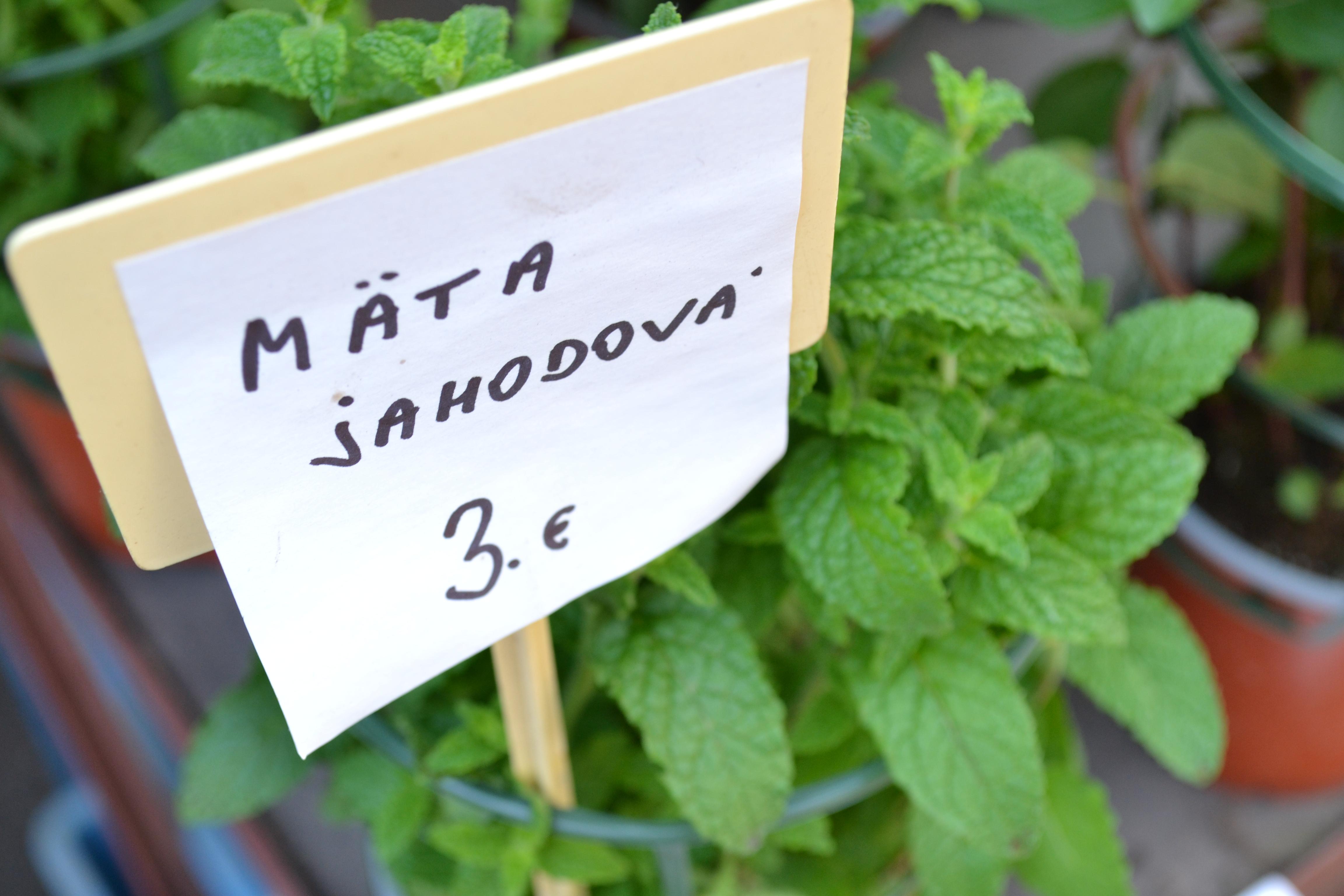 Koriander, mäta, bazalka. Najobľúbenejšie bylinky do kuchyne nájdete už na trhu