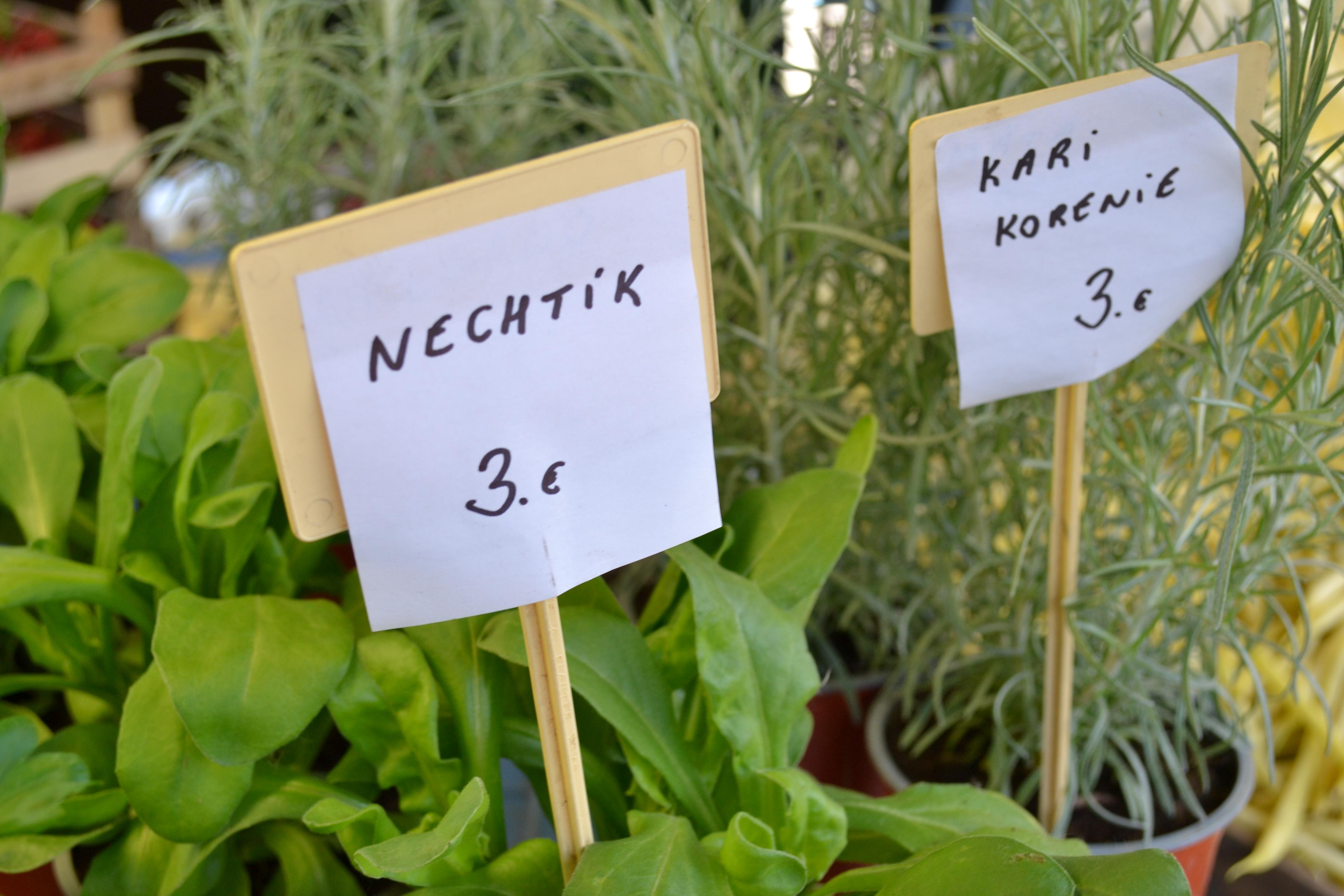 Kuchynské bylinky Trhovisko Miletičova